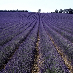 Ode To Valensole